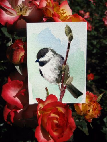 ACEO Limited Edition Chickadee perching