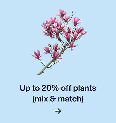 Up to 20% off plants (mix & match)