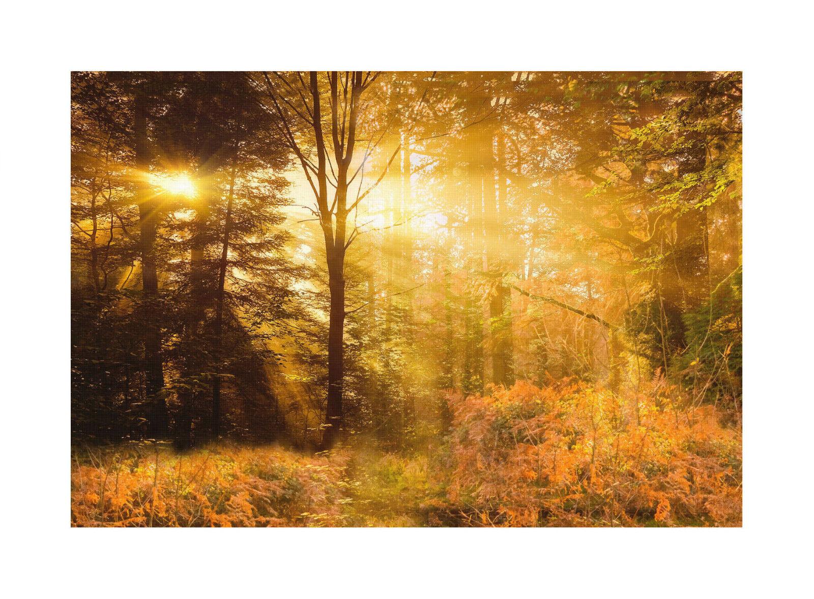 Wald Premium Leinwand Leinwand Leinwand   Keilrahmen Bild Wandbild Bäume Landschaft   M2 74c70b