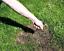 Graines-Pelouse-Sac-5kg-Semences-Gazon-Graminees-Herbe-Verte-Haute-Qualite-Neuf miniature 4