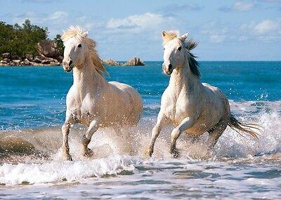 Puzzle Puzzel White Camargue Horses Pferd Pferde Strand Wasser reiten 1000