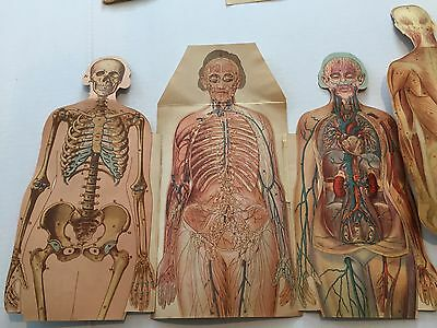 Vintage Antique Anatomical Human Body Male and Female Medical Charts 1930's