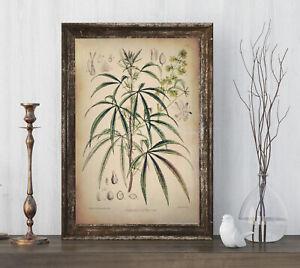 Art Print Cannabis Sativa Medical Marijuana Botanical Poster Print 6x9 to 24x36