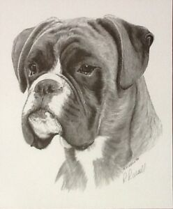 BOXER HEAD by Ray Russell  DOG PRINT 12034 x 10034 in aid of Boxer Rescue - Barnsley, United Kingdom - BOXER HEAD by Ray Russell  DOG PRINT 12034 x 10034 in aid of Boxer Rescue - Barnsley, United Kingdom