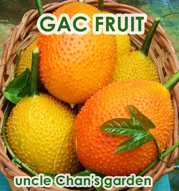 10Pcs Gac Fruit Raress Momordica Cochinchinensis Seeds Exotic Health