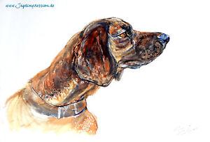 Schweißhund jagdmaler Jagd Nachsuche Drückjagd Clever Jagdhund Bgs GroßEs Sortiment