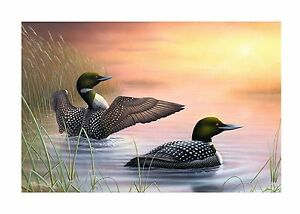 6-034-Morning-Stretch-034-Loon-24x16-Canvas-Print-by-Robert-Metropulos