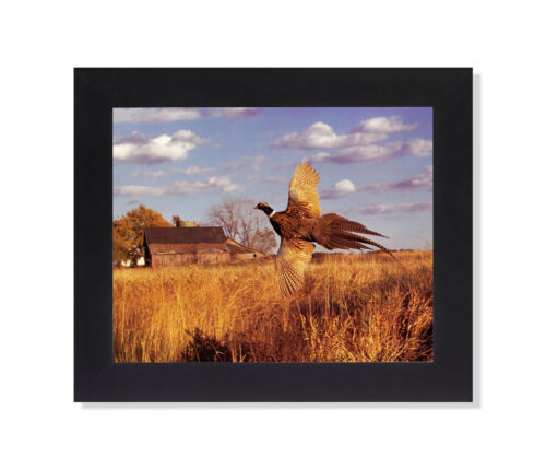 Pheasant Bird Flying in Field by Old Barn Photo Wall Picture Black Framed