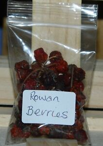 ROWAN-BERRIES-Protection-Positivity-For-Use-In-Spells-and-Incense
