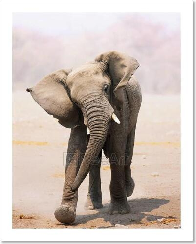 Elephant Bull Charging Art Print Home Decor Wall Art Poster C
