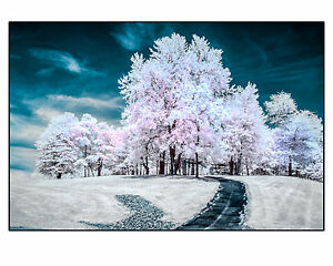 Original-Fine-Art-Photograph-8x10-034-Signed-Print-Color-Infrared-White-Trees-Blue