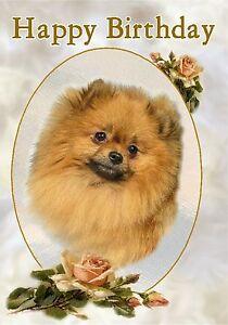 Pomeranian Dog Design A6 Textured Birthday Card