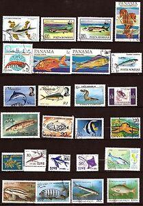 TODOS-LOS-paises-de-la-peces-de-mar-especie-hipocampo-291T1