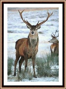 Stag-In-The-Snow-2-New-amp-Exclusive-Cross-Stitch-Kit