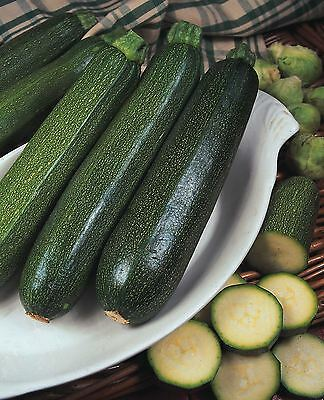 Vegetable - Courgette - Green Bush - 50 Seeds