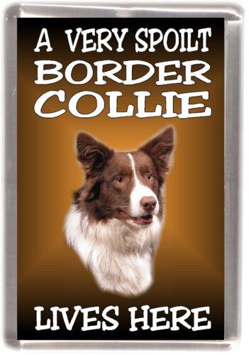 "Border Collie Dog No 2 Fridge Magnet /""A VERY SPOILT . LIVES HERE/"" by Starprint"