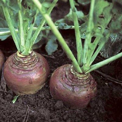 Swede Invitation Appx 300 seeds - Vegetables/Fruits