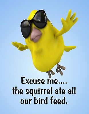 METAL MAGNET Squirrel Excuse Me Birdfeeder Is Empty Humor MAGNET