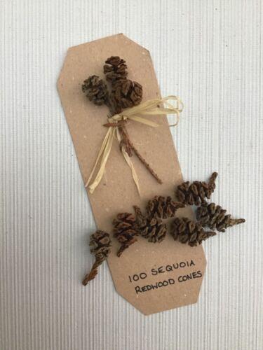 coronas Navidad 100 conos de pino abeto PEQUEÑO Sequoia Redwood-Artesanía escuelas