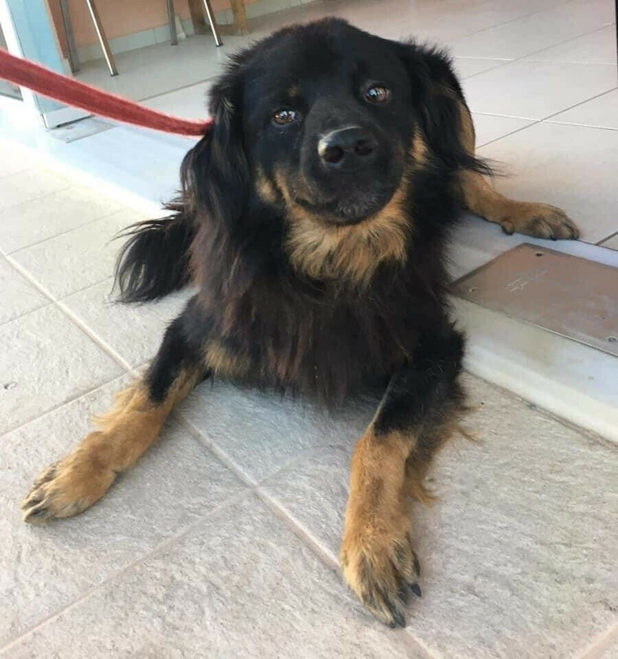 Søde hund