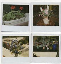 Lot 4 PHOTOS - Polaroïd - Bouquet de fleurs - Plantes - Vers 1970-1980 - Vintage