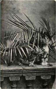 Cat Kitten portraits postcard RPPC real photograph antique cute adorable