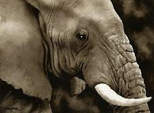 Elephant note cards by watercolor artist Dj Rogers