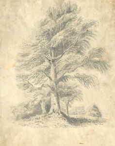 Late 19th Century Graphite Drawing - A Grand Tree