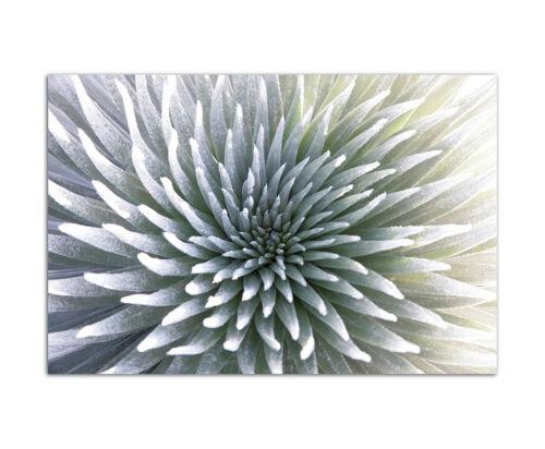120x80cm Pflanze Gewächs exotisch Hawaii