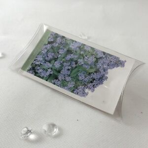 Image Is Loading Forget Me Not Flower Seed Wedding Favours Unique