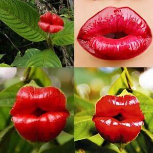 50pcs-Sexy-Red-Lip-Flower-Seeds-Garden-Park-Yard-Plant-Psychotria-Elata-Seeds