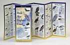The Ultimate Guide to Birds of the New England Coast by Steven M. Lewers & Associates (Paperback / softback, 2001)