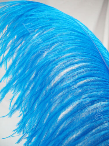 Turquoise Ostrich Feather Plume Premium Large 22-28 inch per Each
