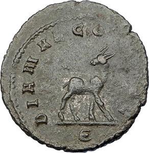 GALLIENUS-son-of-Valerian-I-267AD-Authentic-Ancient-Roman-Coin-DEER-i65644