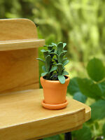 Miniature Dollhouse Fairy Garden Tall Dark Green House Plant In Pot