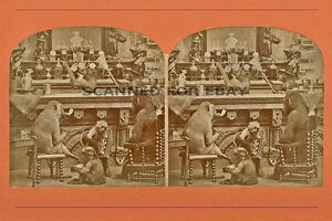 Monkey Business Stereoview Art Print Picture 3d Photo Funny
