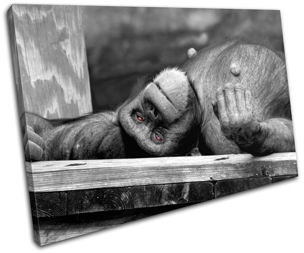 Chimpanzee Monkey Animal P Wildlife Canvas Art Picture Print Decorative P Animal caliente o 5e1c37