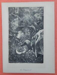Au Gebirgsurwald éléphants Wilhelm Kuhnert Afrique Lithographie 1920-afficher Le Titre D'origine En Quantité LimitéE