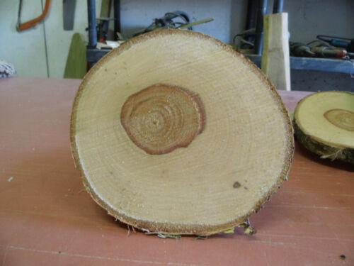 Baumscheibe, disque en bois, 35 x 3 cm, le Bouleau, Mariage, Déco