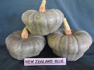 Pumpkin NEW ZEALAND BLUE-Pumpkin Seeds-TASTY & GREAT PRODUCER-20 SEEDS.