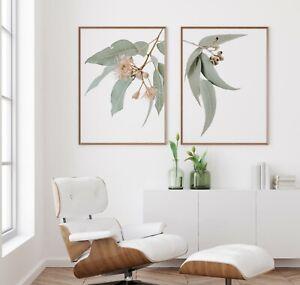 Set of 2 Australian Native Flowers PrintEucalyptus Wall Art