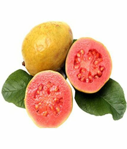 RED GUAVA SEEDS