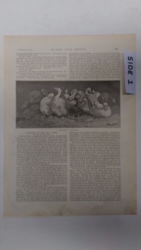 Christmas Martyrs; A Tulle Frock: 1894 Black & White Magazine Pages