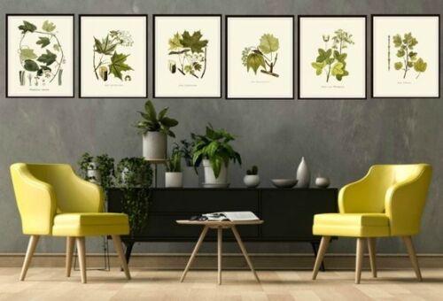 "Set of 6 Vintage Botanical Art Print Poster Reproductions /""Foliage Leaves/"" 8x10/"""