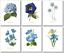 Botanical Prints Set of 6-8 x 10 Blue Flower Wall Art Vintage Floral Decor