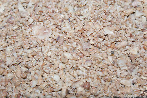 Shell-Grit-Medium-2-5kg-Source-of-Calcium-amp-trace-elements-Orchids-Birds