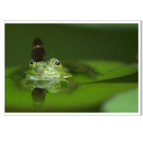 Frog Butterfly Pond Canvas Poster Print Picture living Room Home Wall Decor Art