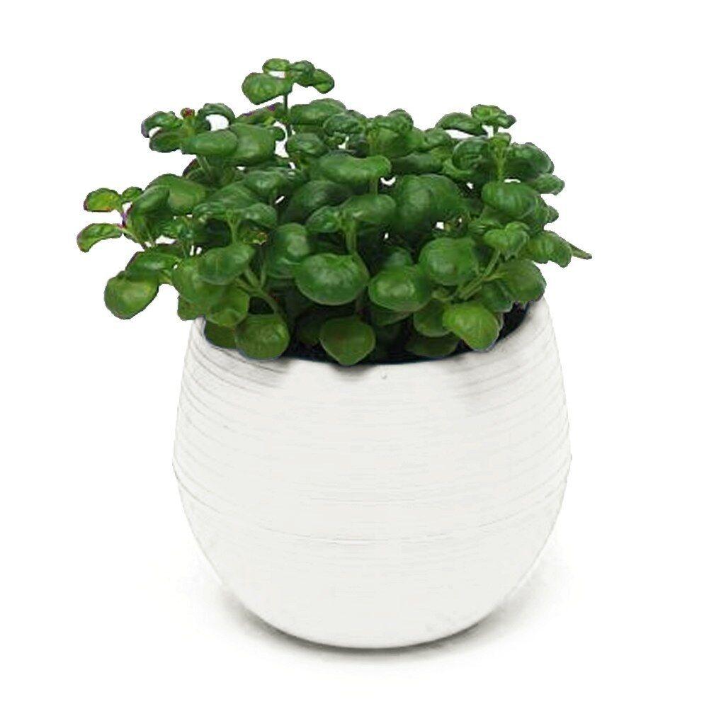 Hot Sale Small Mini Plastic Plant Flower Pot Home Office