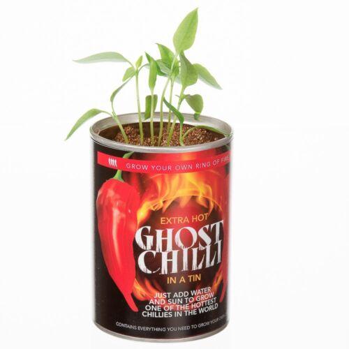 Développer Votre Propre Hot Ghost Chilli Piments Poivrons Secret Santa fun Stocking Filler
