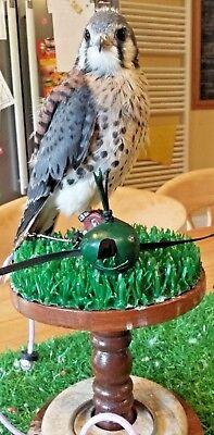 "Falconry Block 5.25"" With Marble Merlin & Sparrowhawk Drip-Dry Astroturf & Ring Kestrel"